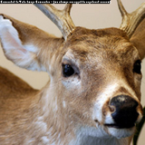 Profile Photos of Garner's Deer Processing & Produce