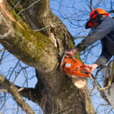 Peter Karlin Arborist - Shady Side