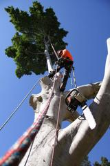 New Album of Chippers Tree Service