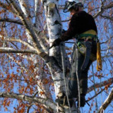 Melgar's Complete Tree Service & Landscaping