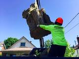 Crane Assisted Tree Removal, Professional Tree Services, hamilton