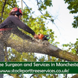 Tree Surgeon South Manchester
