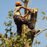 Urban Tree Solutions ltd