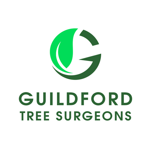 Profile Photos of Guildford Tree Surgeons 14 London Road - Photo 2 of 2