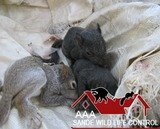 Letting squirrels in your attic go leads to damage and infestations. Rely on AAA Sande Wildlife Control to humanely provide squirrel removal from your home or business.