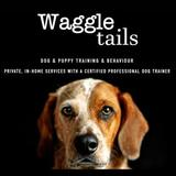 New Album of WaggleTails