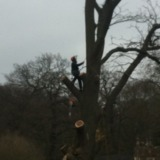Cobham Tree Surgery Ltd