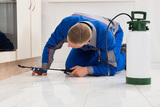 Melbourne pest control services, Natural Pest Solutions, Kamloops