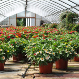 Puckett Greenhouses LLC