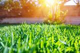 Profile Photos of Mighty Green Lawn Care
