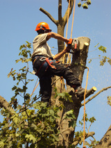 Ross Francis Tree Surgery, Oxfordshire