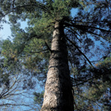 Devil Dog Tree Trimming Services & Land Clearing