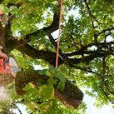 Better City Tree Services, Inc