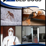 BC Bed Bugs