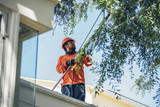 Profile Photos of CP & Sons Tree Service, Inc.