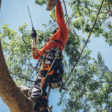 CP & Sons Tree Service, Inc.