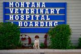 New Album of Montana Veterinary Hospital & Boarding