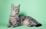 Cat sitting on colored background