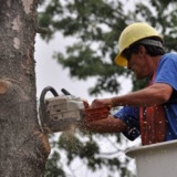 Rochester MN Tree Service
