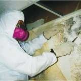 Mold Remediation Cincinnati