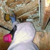 Mold Removal Cincinnati