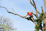 New Album of Tree Service Murfreesboro TN