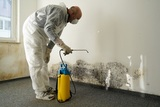 New Album of Mold Removal Experts of Las Vegas