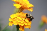 Profile Photos of Denver Wasp and Bee Control