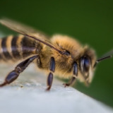 Denver Wasp and Bee Control