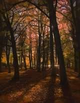 Autumn In the Park I Melanie Frobisher Photo Art Englefield Green