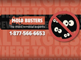 mold busters west island montreal
