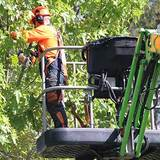 Profile Photos of TreeSafe Environmental Services