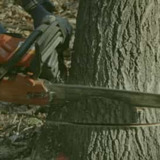 TJA Tree services | Tree Trimming | Tree Services Adelaide