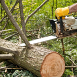 Franklin Tree and Pressure Washing Services in Athens