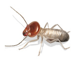 Digital illustration of a worker termite
