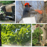 P and J Tree Service Incorporation