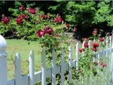 AAA-Fence-Master-Fence-White-Fence, AAA Fence Master of League City, League City
