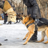 Superior K9 Training Solutions - Santa Monica