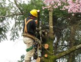 Fort Myers Tree Service of Fort Myers Tree Service