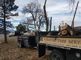 New Album of Arbortec Tree Service