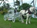 Honolulu Horse and Carriage, Waianae
