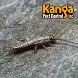 Profile Photos of Kanga Pest Control