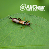 New Album of All Clear Pest Control