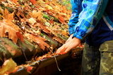 Colorful autumn leaves on the roof in the Rhine Brisbane Wide Gutter Cleaning 3/89 Albion Rd, Albion QLD 4010