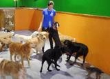 Profile Photos of 24 Hour Dog Daycare