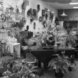 Profile Photos of Duffy's Flowers & Plants