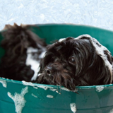 Profile Photos of Quality Pet Grooming