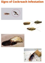 New Album of Cockroach Control Canberra