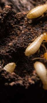 Profile Photos of Allied Termite & Pest Control Inc