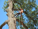 Tree Removal Service Birmingham 1821 11th Ave S  # 55551